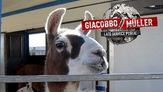 Möchtest du bei «Giacobbo / Müller im Circus Knie» dabei sein?