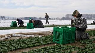 Masseneinwanderung: Bauer gegen Bauer