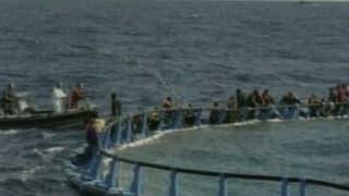 Italien rettet zahlreiche Flüchtlinge aus dem Meer