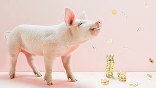 Wieder kein Schwein gehabt