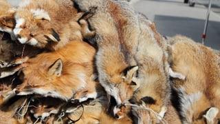 Ostschweizer Jäger werben für Fuchspelz