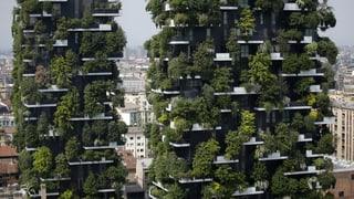 Stadt Zürich muss begrünte Fassaden fördern