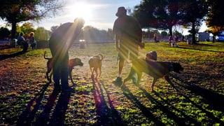 St. Gallen will Hundesteuern erhöhen