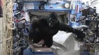 So viel Spass muss sein: Im Affenkostüm durch die ISS