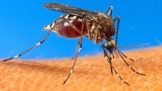 Mehr Malariafälle in der Schweiz