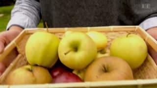 Apfelallergie – Alte Sorten sind verträglicher