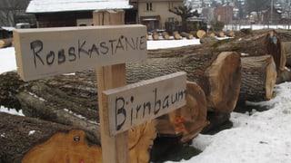 Die wertvollsten Baumstämme der Zentralschweiz im Verkauf