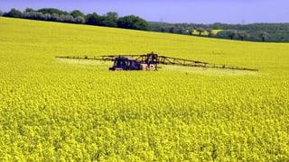 Bienensterben: EU verbietet Pestizide – Schweiz zieht mit