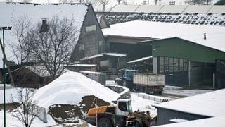 Die beschlagnahmten Luzerner Rinder werden gründlich untersucht
