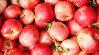 Apfelpreise wie an der Börse