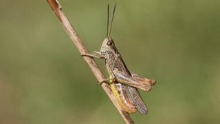 Quiz – Was wissen Sie über singende Insekten?