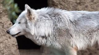«Ein Frontalangriff auf den Artenschutz»