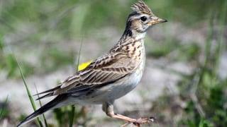 Menschen machen Vögeln das Leben schwer