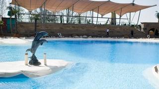Conny-Land siedelt zwei Delfine um
