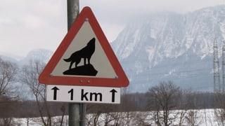 Video «Wolf: Wölfe im Wald und im Dorf (2/3)» abspielen