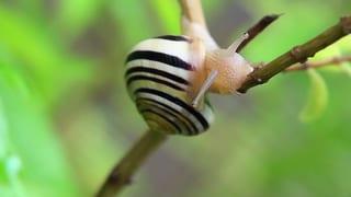 Video «Safari im Garten: Schneckenfresser (3/3)» abspielen