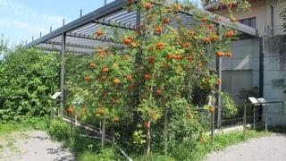 Vogelwarte Sempach baut ein Besuchszentrum