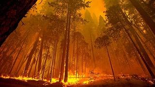 Wind droht Brand weiter anzufachen