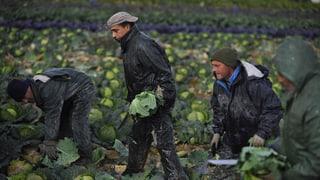 «Der Migrationspakt wird bewusst falsch dargestellt»