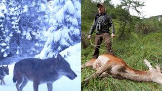 Wer ist Chef im Wald: Wolf oder Jäger?
