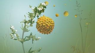 So fliegen die Pollen