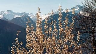 «Parco Val Calanca» – 3 vischnancas per in parc