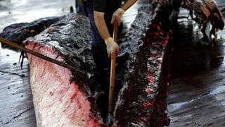 «Die Japaner lieben Wale genauso wie wir»