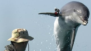 Kampf-Delfine wechseln die Seiten