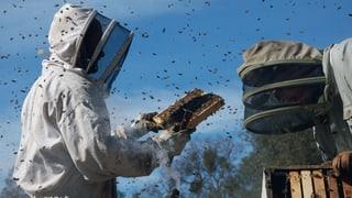 Video «More Than Honey» abspielen