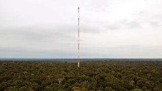 Ein 300 Meter hoher Turm mitten im Dschungel