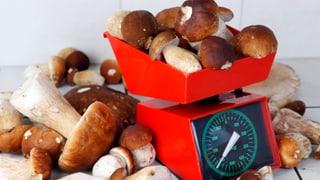 Aargauer Pilzjahr 2013: Die Ernte hat sich halbiert