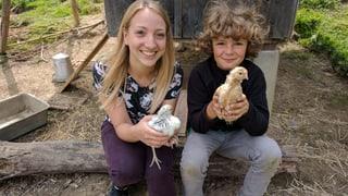 «Zambo bi dir» besucht Andrin auf dem Bauernhof