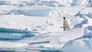 Ein Freudentag für die Inuit, die Bären und die Wale
