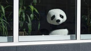 «Die Missstände waren dem WWF-Hauptquartier in Zürich bekannt»