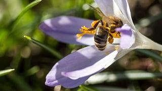 Polizei ermittelt Ursache eines Bienensterbens im Emmental