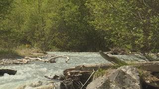 Uschè paucs peschs sco anc mai en la Val Müstair