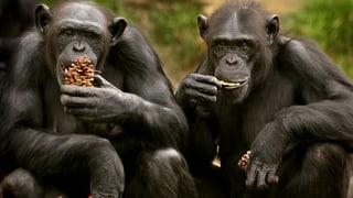 Affen vergessen nicht