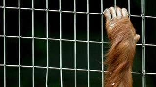 Sollen Primaten Grundrechte erhalten?