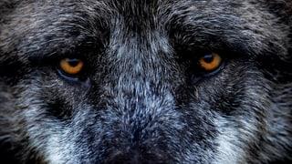Vom Jäger zum Gejagten