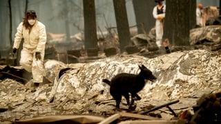 California: Passa 600 persunas sparidas suenter incendis
