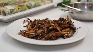 Essen Sie Insekten?