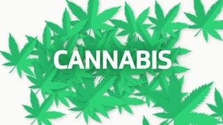 Cannabis ist die weitaus am häufigsten konsumierte illegale Substanz. Auch die «legale» Variante ist im Vormarsch.