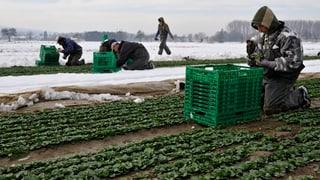 Landwirte fürchten neue Ventilklausel