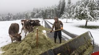 UNO-Jahr: Schweizer Bauernfamilie ist Vorbild