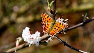 Mehr Pflanzen und Tiere in Aargauer Wälder