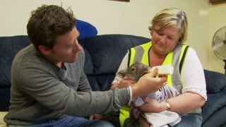 Sven Furrer hilft Wombats aufzupäppeln (Artikel enthält Video)