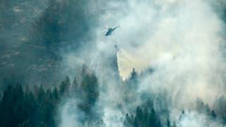 Waldbrände in Schweden sind ausser Kontrolle