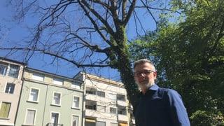 Bäume in Basel leiden unter Hitze und Trockenheit