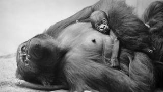 In den Schweizer Zoos hat sich in den letzten Jahren viel verändert – eine Zeitreise