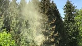 Trüber Himmel - viele Pollen in der Luft